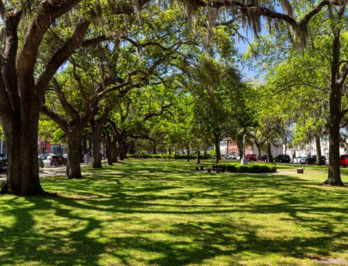 Relax in Savannah's Green Spaces