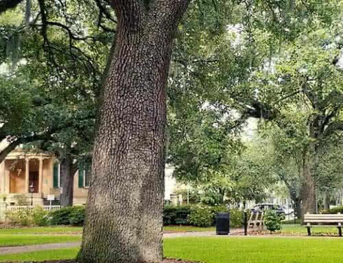Savannah's Historical Squares: Oglethorpe Square
